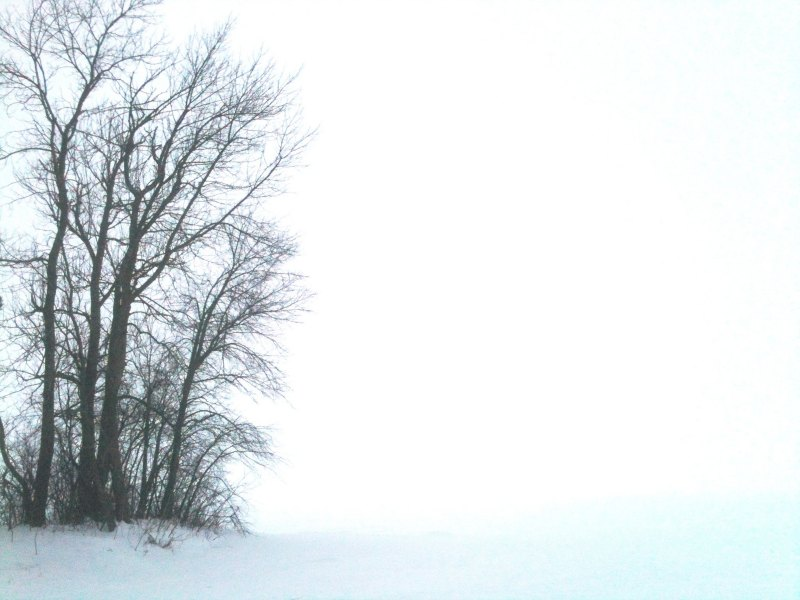 Trees surrounded by snow
